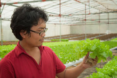 Landbouwer in hydroponic aquicultuur royalty-vrije stock afbeelding
