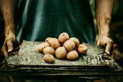 Landbouwer met aardappels stock foto's