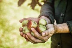 Landbouwer met appelen royalty-vrije stock foto