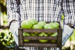 Landbouwer met appelen stock fotografie