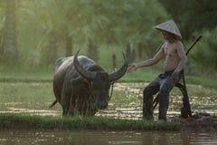 Landbouwer met buffels Royalty-vrije Stock Afbeelding