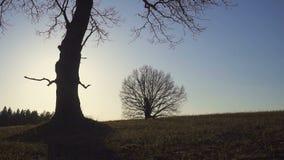 Landbouwer met een schop die op het gebied lopen Zij dragen materiaal om een boom te planten Op de zonsondergang Zachte nadruk stock videobeelden