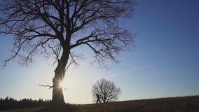 Landbouwer met een schop die op het gebied lopen Zij dragen materiaal om een boom te planten Op de zonsondergang Zachte nadruk stock video