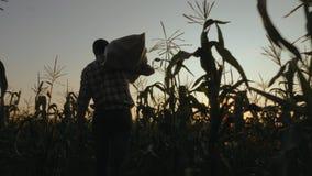 Landbouwer met een zak graan Het oogsten stock videobeelden