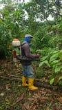 Landbouwer met het bespuiten van machine op zijn rug die een cacaoboom bespuiten Stock Foto's