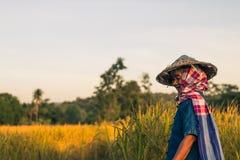 Landbouwer met rijstoogst Royalty-vrije Stock Foto
