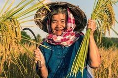 Landbouwer met rijstoogst, Conceptenlandbouwer Royalty-vrije Stock Afbeelding