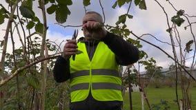 Landbouwer met smartphone en schaar dichtbij frambozenzaailingen stock video