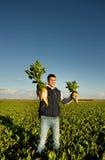 Landbouwer met suikerbieten royalty-vrije stock afbeelding