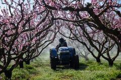 Landbouwer met tractor die een spuitbus van de luchtontploffing met een chemisch insecticide of een fungicide in de boomgaard van stock fotografie