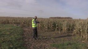 Landbouwer op beschadigde cornfield stock videobeelden