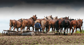 Landbouwer op een fileld 2 Stock Afbeelding