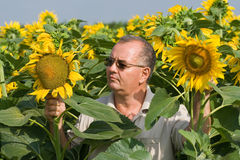 Landbouwer op een gebied van de zonbloem Stock Fotografie