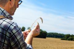 Landbouwer op een tarwegebied Stock Foto