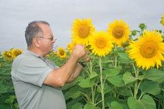 Landbouwer op een zonnebloemgebied Stock Foto