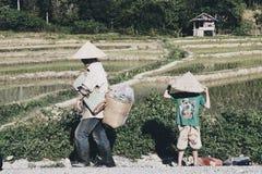 Landbouwer op gebied Stock Foto