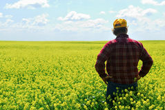 Landbouwer op Gebied Canola Royalty-vrije Stock Foto's