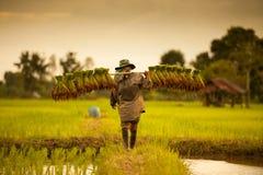 Landbouwer op groene gebieden Stock Foto's