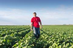 Landbouwer op sojaboongebieden Stock Foto