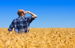 Landbouwer op tarwegebied Stock Afbeeldingen