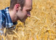 Landbouwer op tarwegebied Stock Fotografie