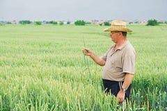 Landbouwer op tarwegebied Stock Foto