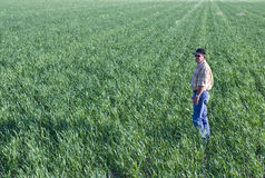 Landbouwer op tarwegebied royalty-vrije stock afbeeldingen