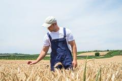 Landbouwer op tarwegebieden stock afbeeldingen