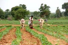 Landbouwer Plowing Stock Fotografie