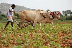 Landbouwer Plowing Stock Foto