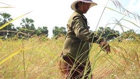 Landbouwer in Thailand stock video