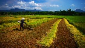 Landbouwer in Vietnam Stock Afbeeldingen