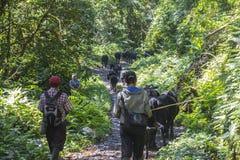 Landbouwer in wildernis van Panama Royalty-vrije Stock Afbeeldingen