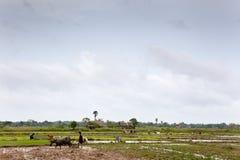 Landbouwers Stock Afbeelding