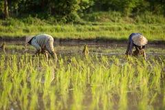 landbouwers royalty-vrije stock foto's