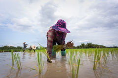 landbouwers royalty-vrije stock foto