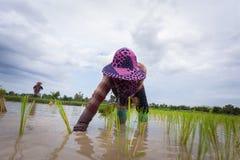 landbouwers royalty-vrije stock afbeeldingen