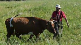 Landbouwers belangrijke koe van weiland stock footage