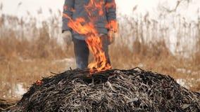 Landbouwers brandende stapel van droog riet stock footage