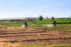 Landbouwers die aan de gebieden werken Stock Foto's