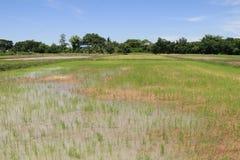 Landbouwers die bij padievelden werken Royalty-vrije Stock Afbeeldingen