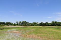 Landbouwers die bij padievelden werken Stock Foto's
