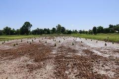 Landbouwers die bij padievelden werken Stock Afbeeldingen
