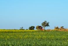 Landbouwers die in een Mosterd gebied-India werken Stock Foto's