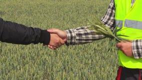 Landbouwers die handen op graangewassengebied schudden stock videobeelden