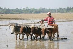 Landbouwers die landbouwgebied ploegen Royalty-vrije Stock Foto's