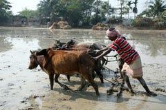 Landbouwers die landbouwgebied ploegen Stock Foto