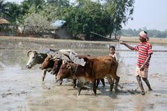 Landbouwers die landbouwgebied ploegen Royalty-vrije Stock Foto