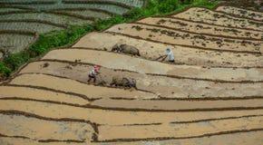 Landbouwers die met buffels aan gebied werken stock afbeelding