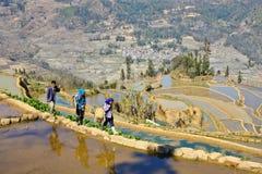 Landbouwers die op het Yuanyang-terrasvormige aanleggebied lopen stock afbeeldingen